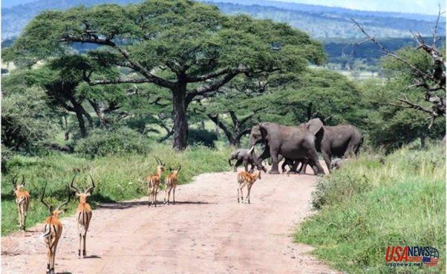 Reasons why a Lake Manyara getaway ticks all the right safari boxes