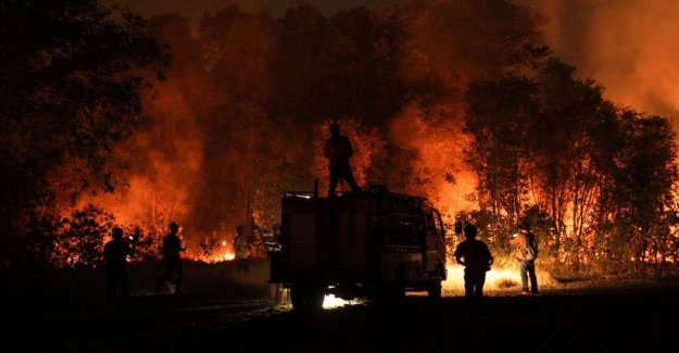 From Siberia to Brazil: the World stands in flames