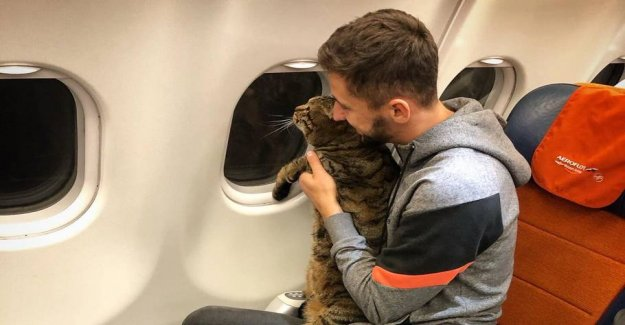 Denied access on the plane: Your cat is too fat