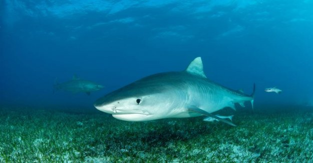 Disappeared turists hand found in shark