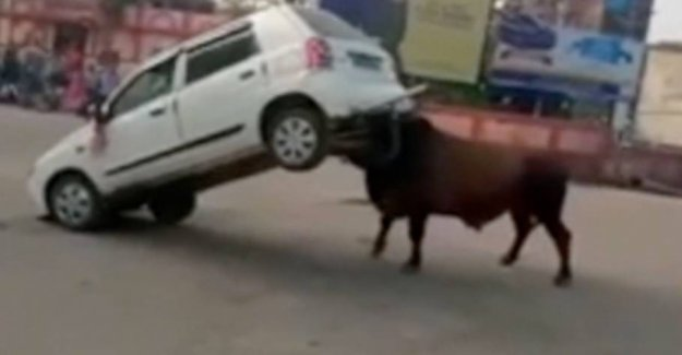 Driver used the horn: So went the bull crazy