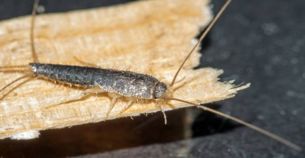 New pest invades the homes of the