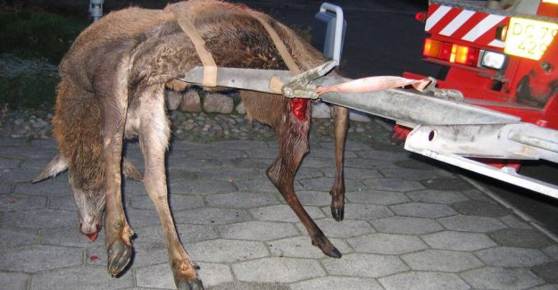 Traffic accidents with deer costs society dearly