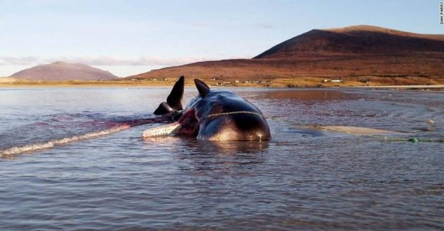 Young whale found dead with 100 kilos of garbage in the stomach