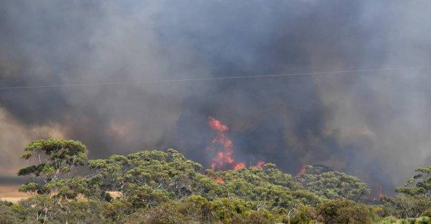 Kæmpebrand get the military to evacuate australian turistø