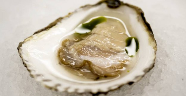 Many danes are sick of oysters