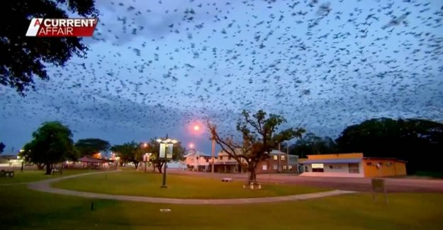 Bats taking over the city