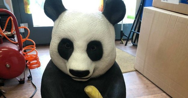 Søren tears: Rare panda destroyed in the mail
