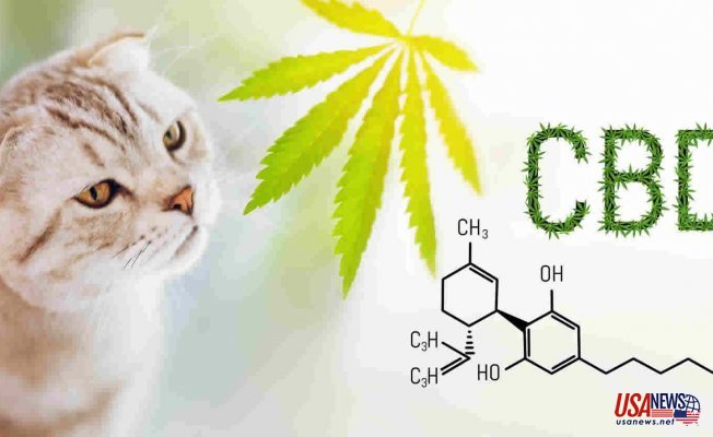 CBD for Pain Management: What Are My Options