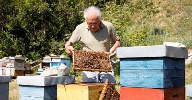 Roberto Ballini, the man who talks to the bees: So I learned to talk with them