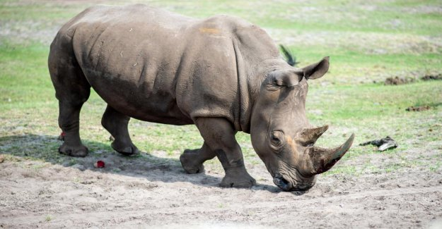 Serengeti-Park in project rescue for the rhinos