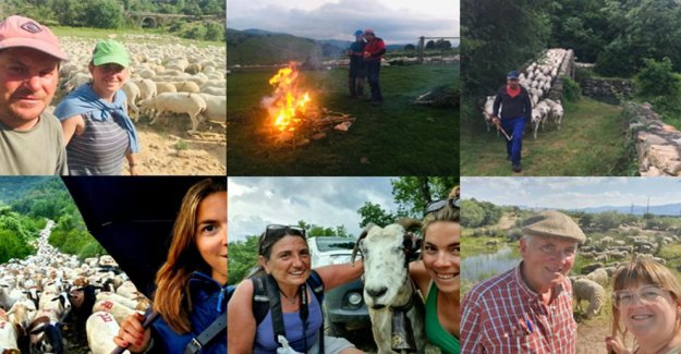 The transhumance in pictures: A trip of 150 km to walk