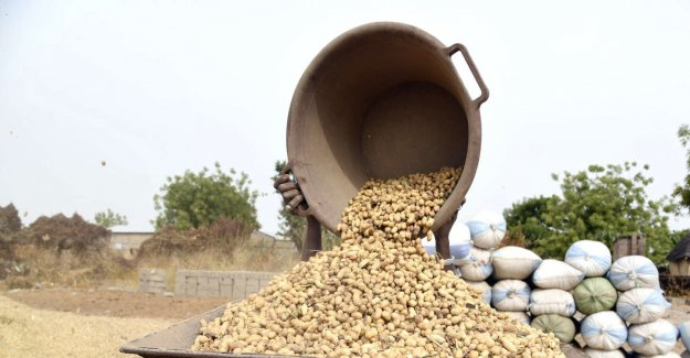 In Senegal, the war of the peanut rages between chinese exporters and olive oil local