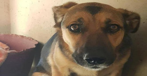 Adopted and rejected: the Star is back in the kennel (and try, finally, affection)