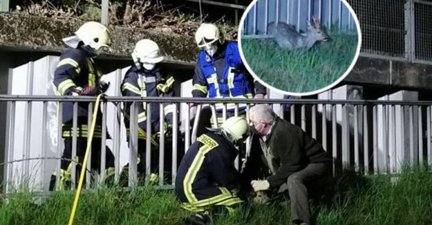 Betzdorf: Wildlife operation: Deer rescue from metal fence