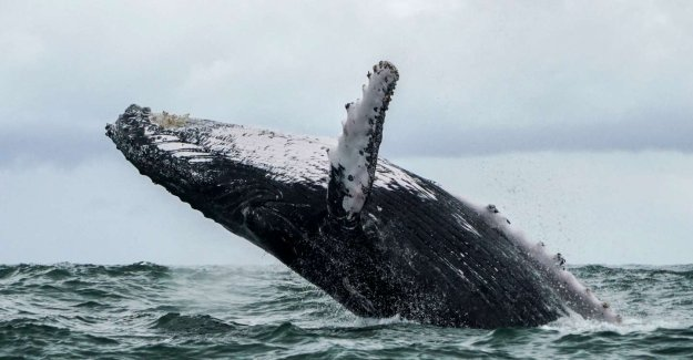 Already survivor of a crash, an American fisherman survives after being swallowed by a whale