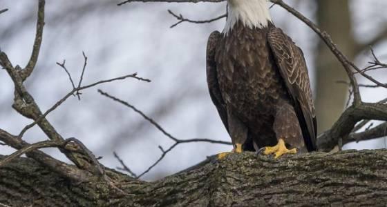 Editorial: Don't kill a species-saving law