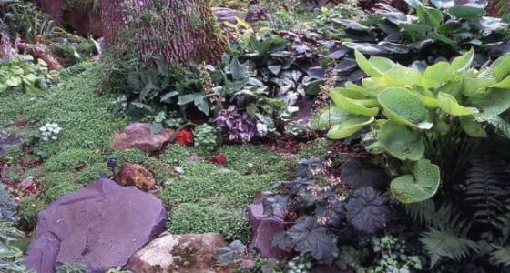 How to create your own backyard miniature wetland