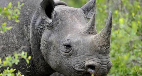 Humans are killing off the animal kingdom