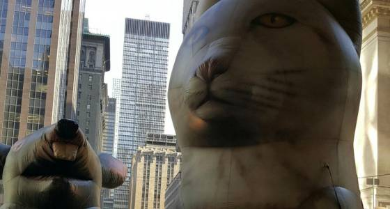Inflatable protest rat gets chased off by even bigger cat