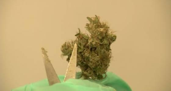 It's time to expand the medical marijuana program   Editorial