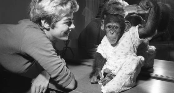 Looking Back: There's Monkey Business In The Hatfield House (June 18, 1959)