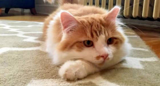 Marble through Mhysa: See photos of kitties entered in Cutest Cat contest 2017