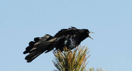 March Nature Almanac: Southern birds move up into Boulder County