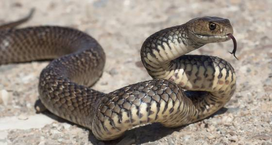 My house is overrun by snakes and I can't leave