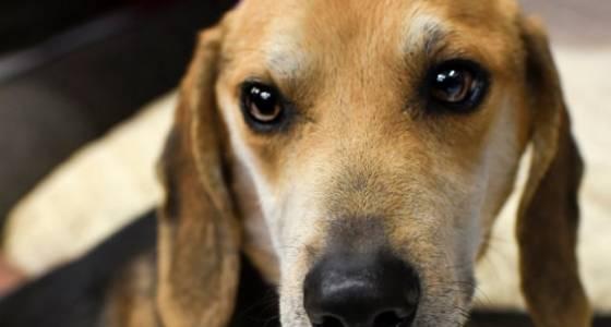N.J. pets in need: Feb. 27, 2017