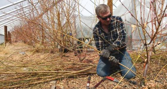 O'Meara: Pruning fruit trees a late winter task