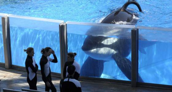 SeaWorld misses analysts' expectations, losing nearly $12 million in fourth quarter
