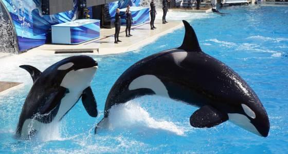 SeaWorld reports lackluster revenues, attendance