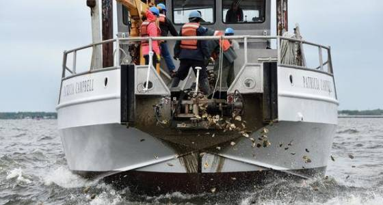 Seeding project near Key Bridge looks to give oysters 'a second chance' in the Patapsco