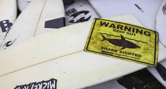 Shark Attacks 2017: After Reunion Island Deaths, France Must Kill Sharks, World's Best Surfers Argue