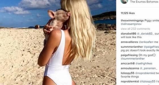 Something is killing the famous swimming pigs of the Bahamas