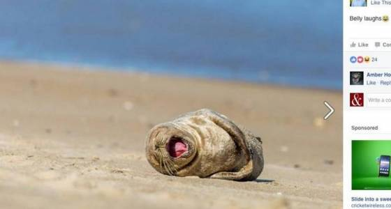 This sunbathing seal just swam 500 miles and was caught on video taking a nap