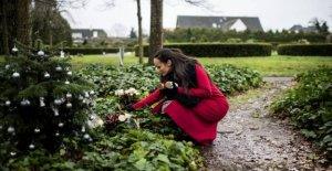 Church message to the widow: Remove your christmas tree from the grave site