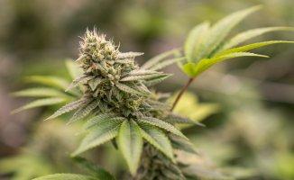 4 Things to Consider When Choosing a Marijuana Vendor Online