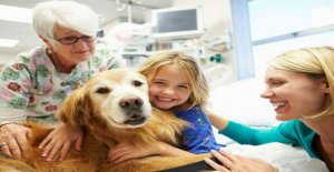 Pet therapy-the antidote to loneliness. More than ever now, in the time of the Covid and lockdown