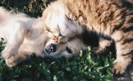CBD Oil and Its Benefits for Pets