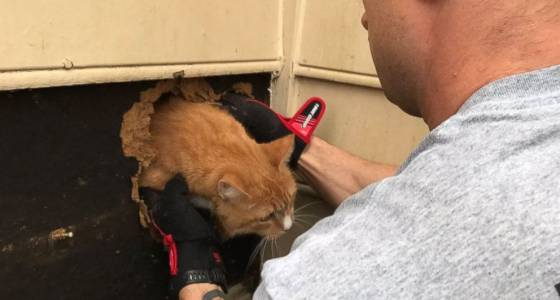 Cat rescued from inside chimney: 'She was just happy to be out of there'