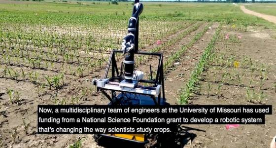 Corn monitoring robots help scientists study the effects of climate change on food crops
