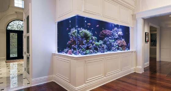 Inside the fishy world of NYC's aquarium obsessives