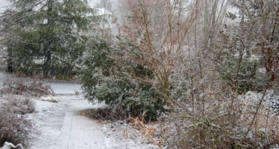 Portland Metro Monday Weather: Cold showers increase by afternoon; snow in the foothills