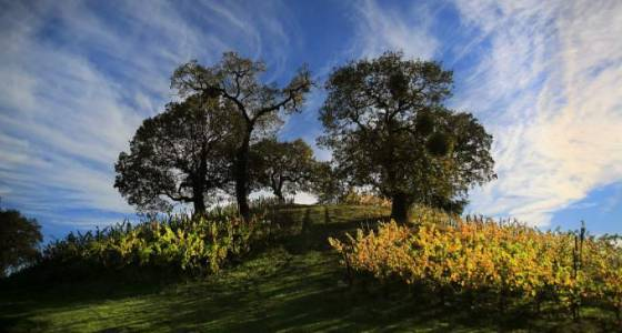 TIME Magazine includes Sonoma County in best places to travel