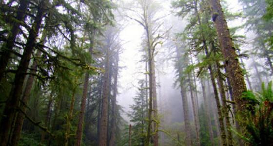 Tobias Read sticks by Elliott State Forest vote despite environmental outcry
