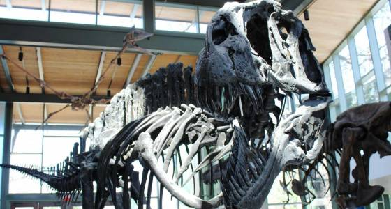 Transformed Witte Museum opens this weekend: 'People will be blown away'