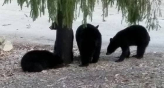 WATCH: Bear family enjoys the warm weather in N.J. neighborhood